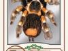 13agbb_9012_tarantula_sm